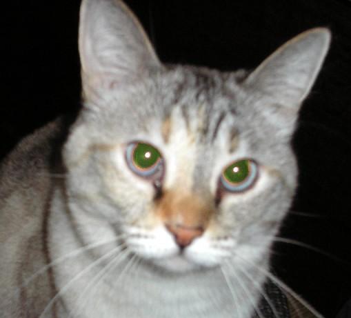 TomGreenleaf profile image